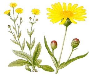arnica-bio-peluqueria-tintes-vegetales-colorantes-naturales-barcelona-sin-amoniaco-colorantevegetal-color-natural