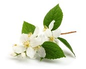 bhringaj-bio-peluqueria-tintes-vegetales-colorantes-naturales-barcelona-sin-amoniaco-colorantevegetal-color-natural
