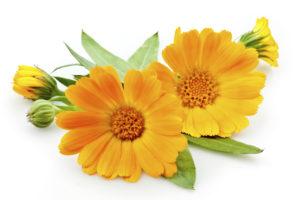calendula-bio-peluqueria-coloracion-vegetal-barcelona