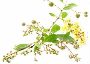 henna-bio-peluqueria-tintes-vegetales-colorantes-naturales-barcelona-sin-amoniaco-colorantevegetal-color-natutal-plantas