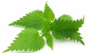 ortiga-biopeluqueria-barcelona-coloracion-vegetal-bio-salon-biocoloracion