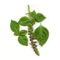 tulsi-bio-peluqueria-tintes-vegetales-colorantes-naturales-barcelona-sin-amoniaco-colorantevegetal-color-natural